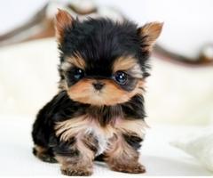 Hoe Vaak Moet Ik Mijn Pup Ontwormen Dierenkliniek Hoogveld